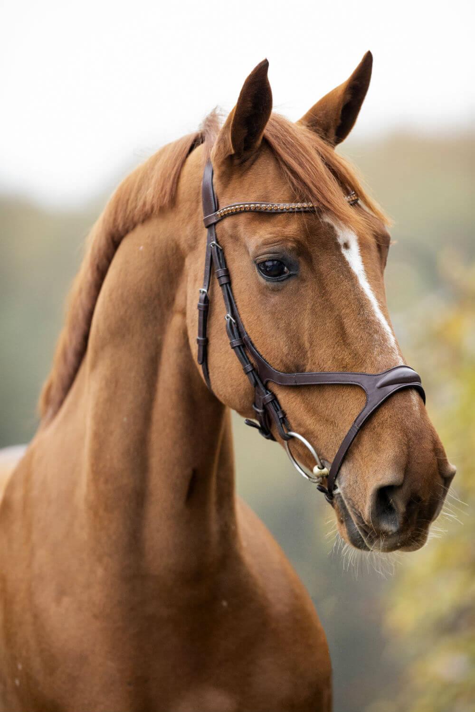 paard-1-4
